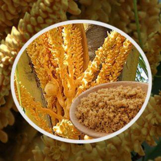 Gulamerah di Bali – Zucchero integrale dei fiori di Cocco